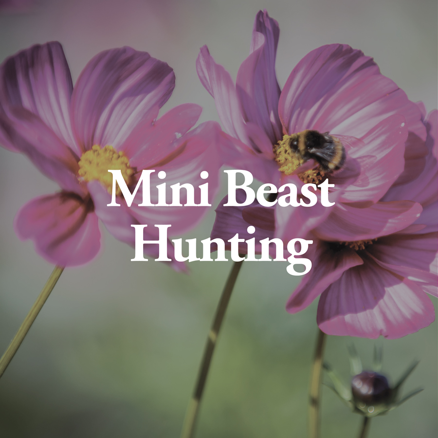 LineUp Images_Mini Beast Hunting.jpg