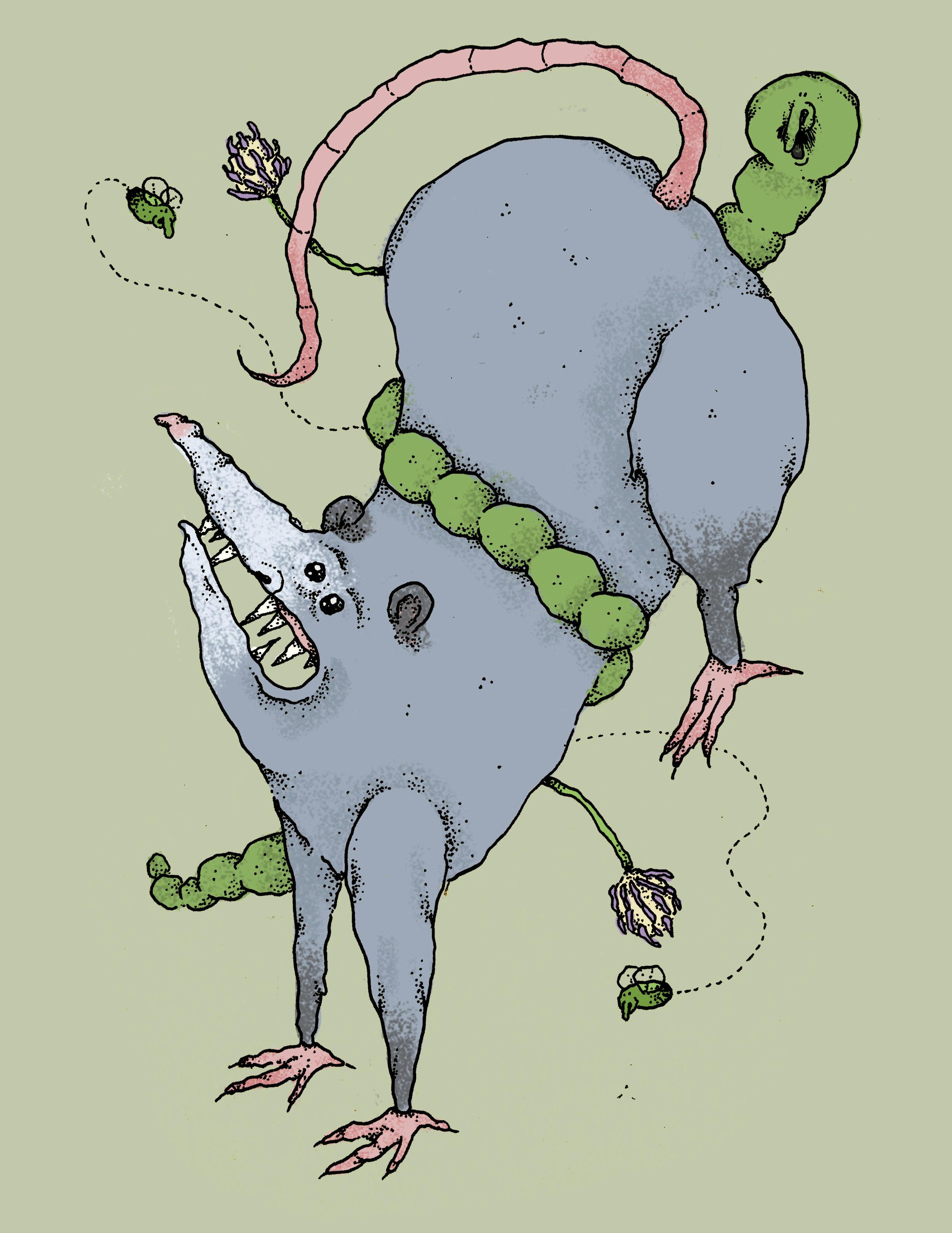 possumcatepillar.jpg
