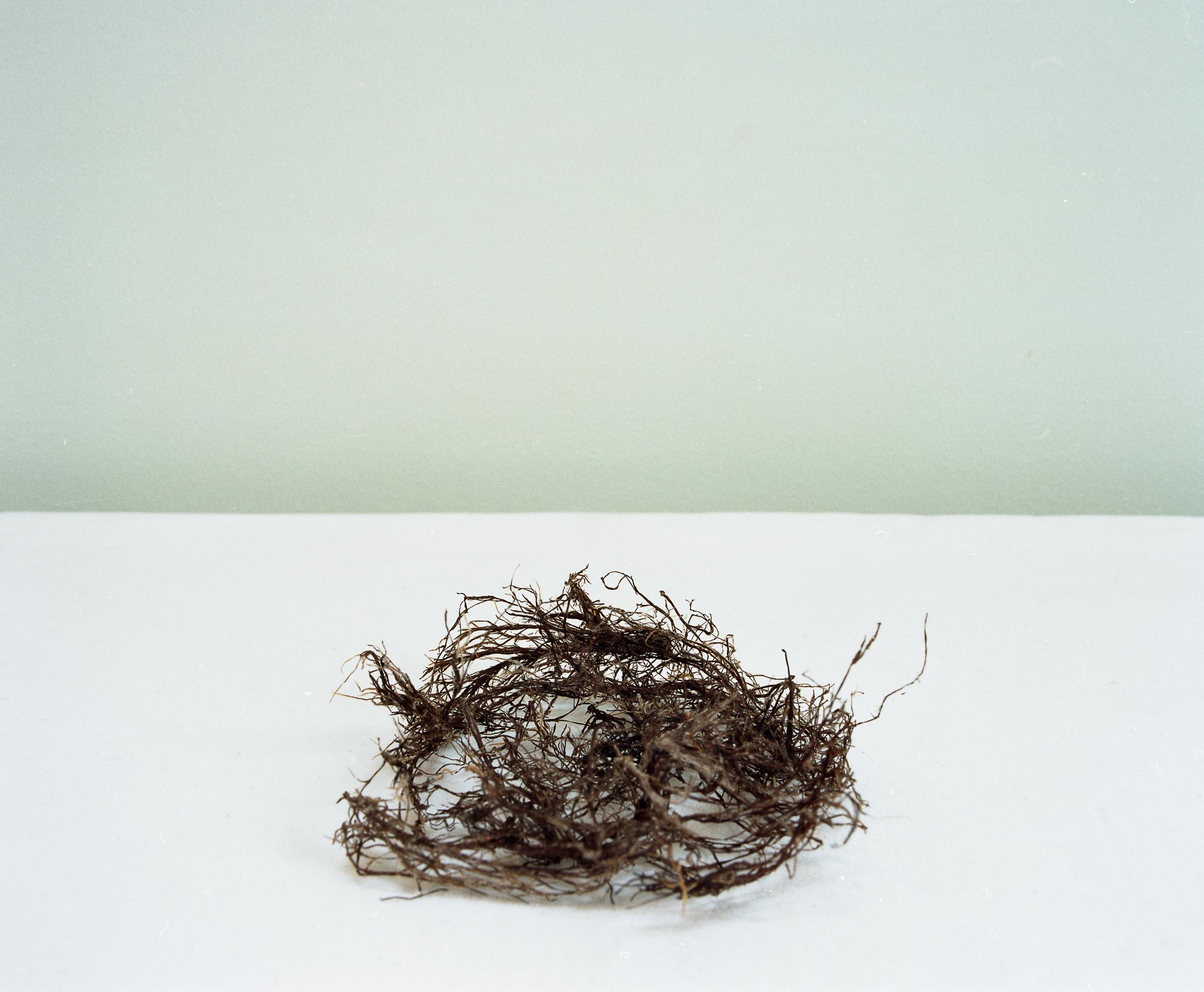 life-things-nest.jpg