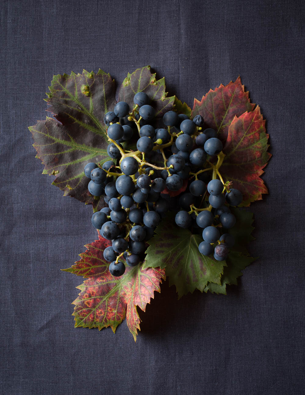 grapes and grape leaves