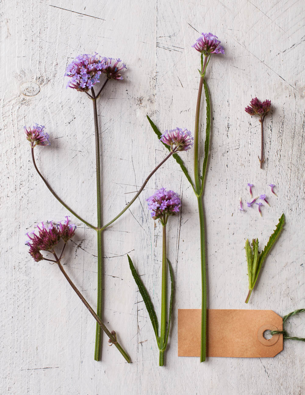 Photograph of purple verbena flowers on a painted wood background