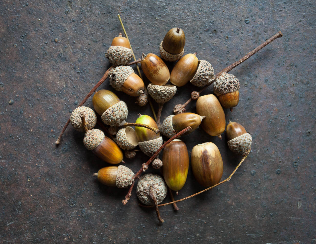 Acorns arranged on an old tile