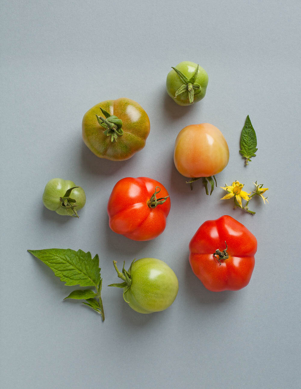 tomatoes on a blue/grey paper background