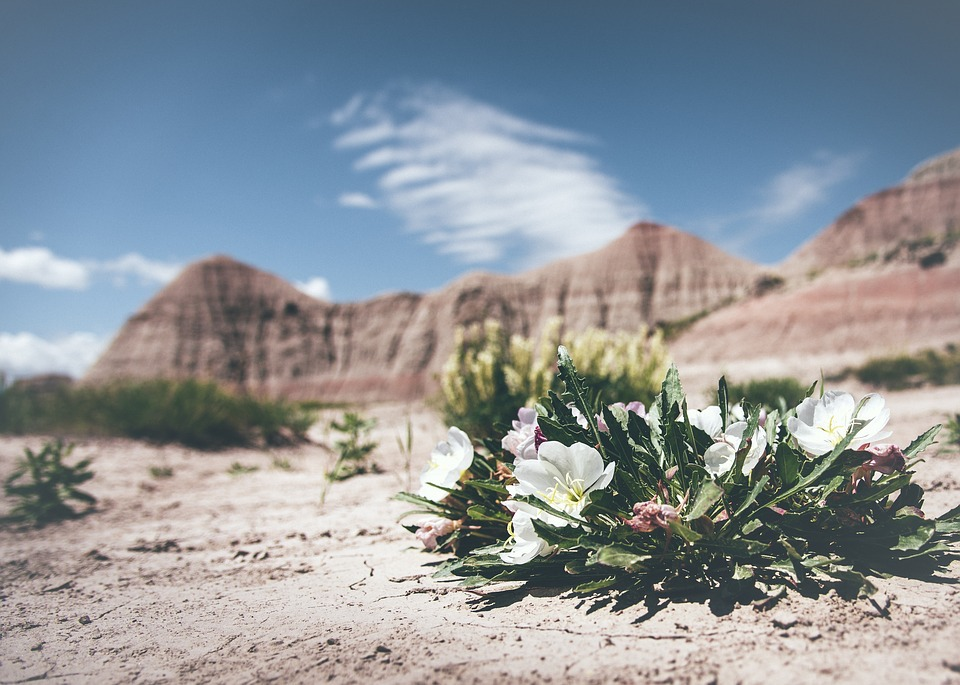 INTO THE WILD - See Kate's favorite places to view desert wildflowers