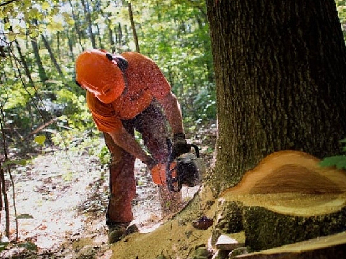 Forest Industry Professionals