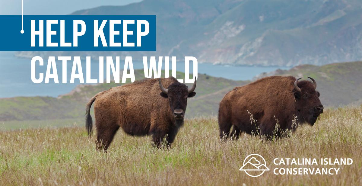 Keep Catalina Wild.jpg
