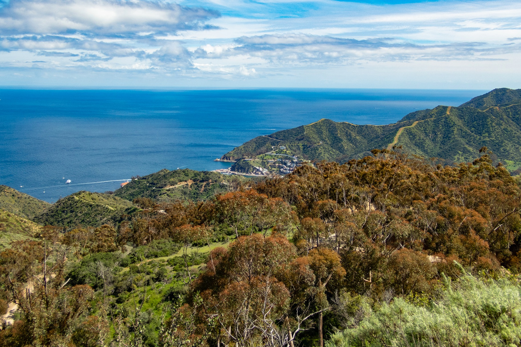 Spectacular Vistas - Stretching out of the vast lands of the Catalina Island Conservancy, Run Catalina gives the opportunity to run in the island's interior and experience beautiful views of the coastline and wildlife sightings in remote locations along its trails.