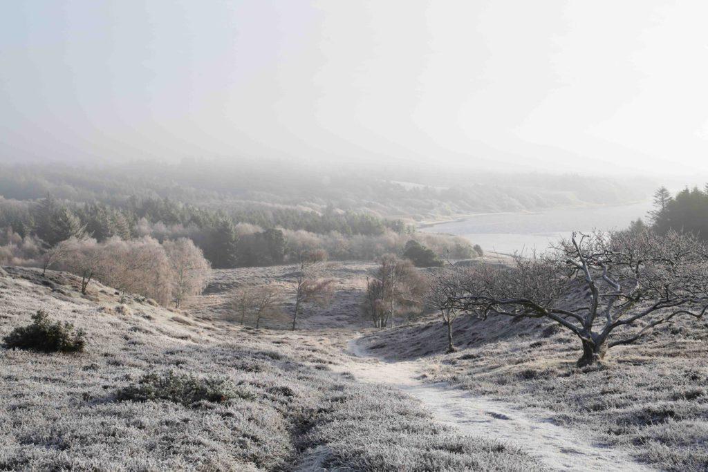 Oldtidshøje i Thy. Nationalpark Thys enestående natur omfavner alle TCMAs arrangementer i Vestervig Foto: Hans Henrik G. Larsen