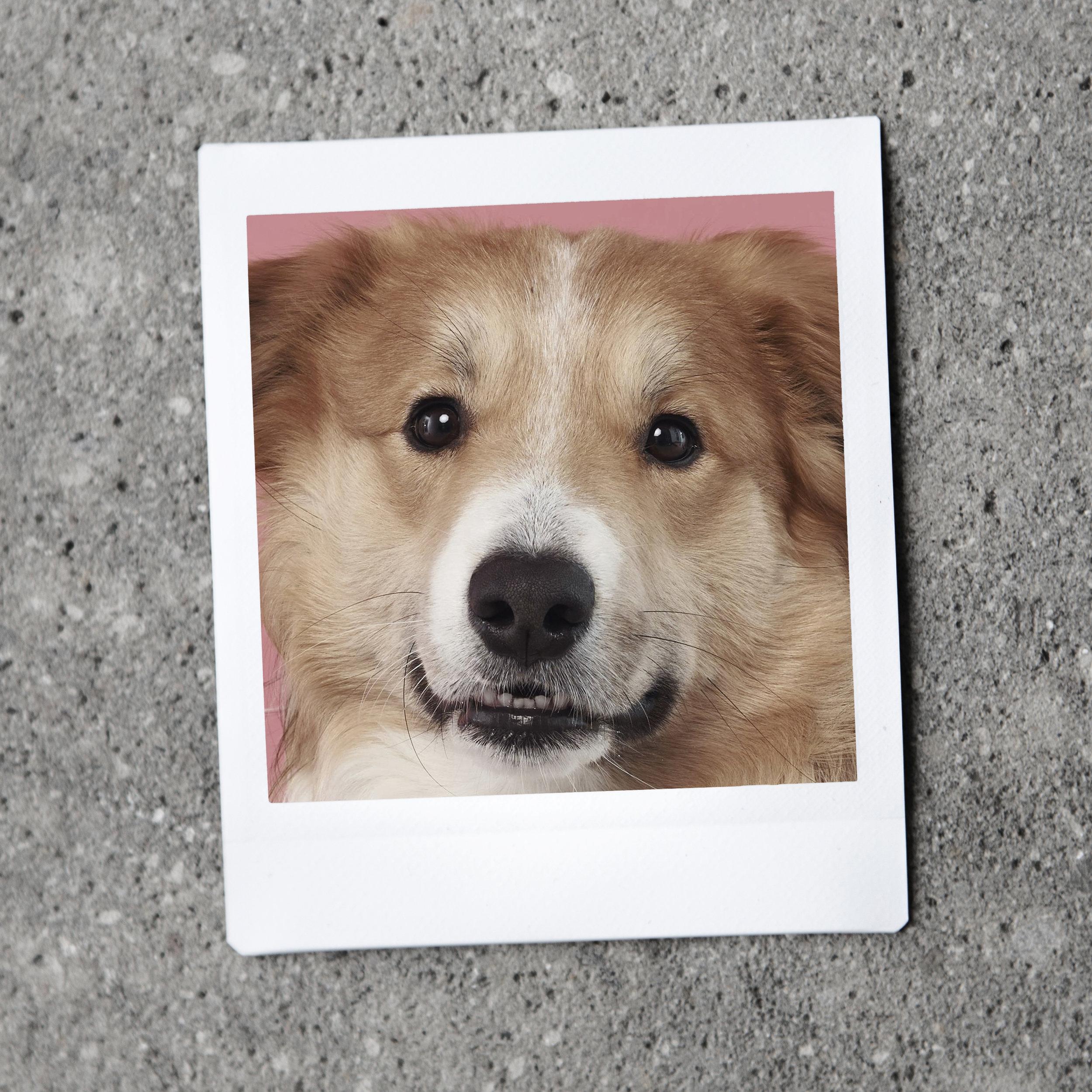 Milo - kontorhund hos Laptop Club
