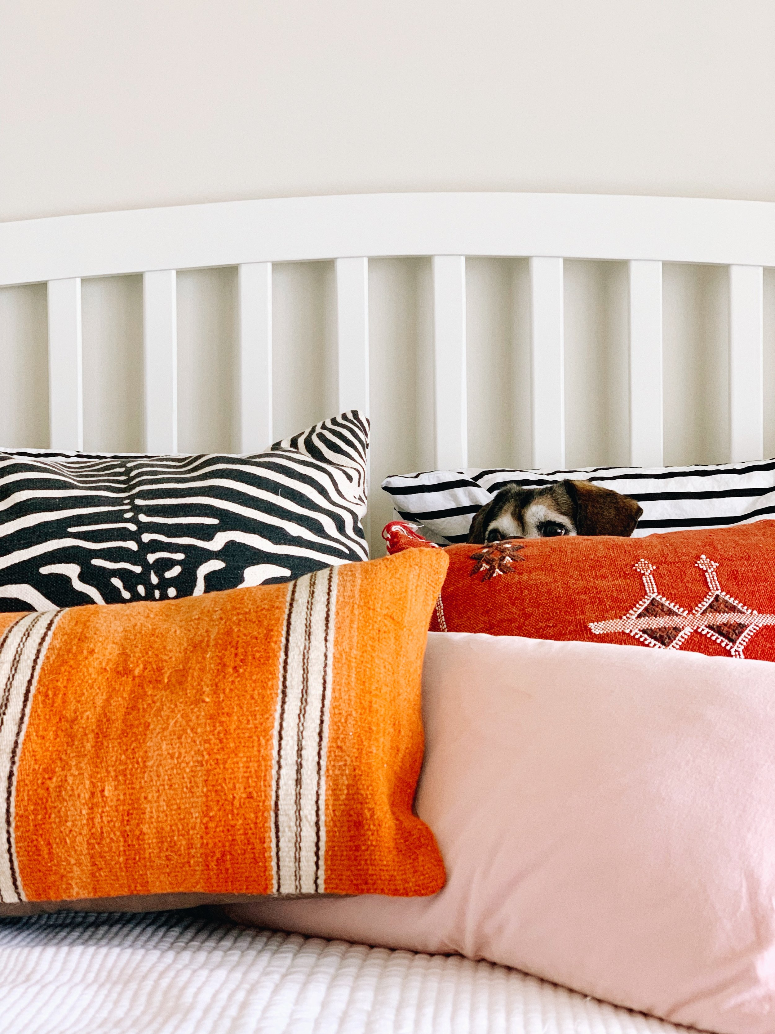 how much orange is too much orange… - also, how many pillows are too many pillows?fenway's been enjoying this pile of orange and pink with punchy black & white accents in our new-ish guest room (former home office). I still need to find stuff for the walls, a new lamp and a bureau but I like where it's headed.