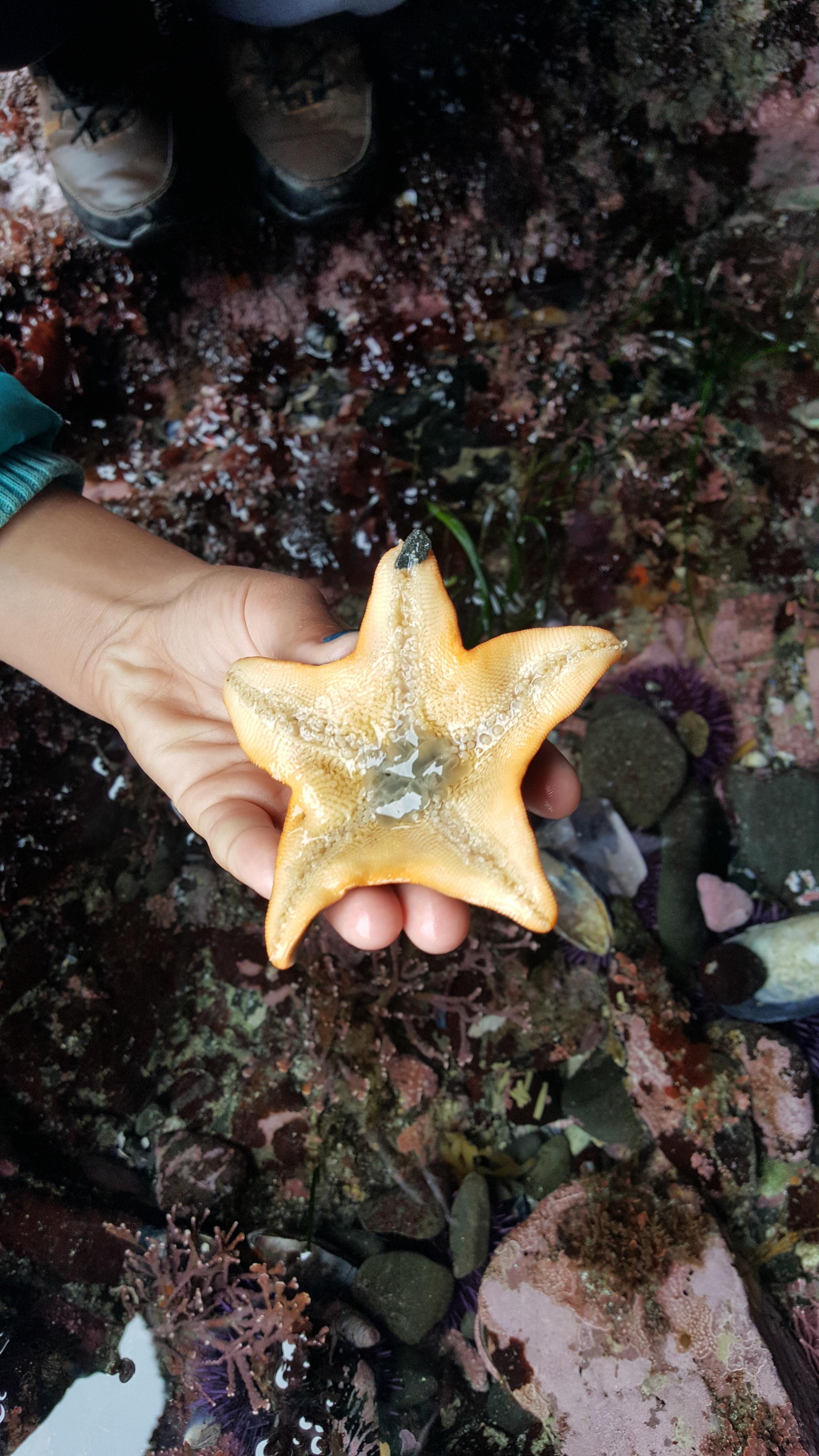 sea_star.jpg