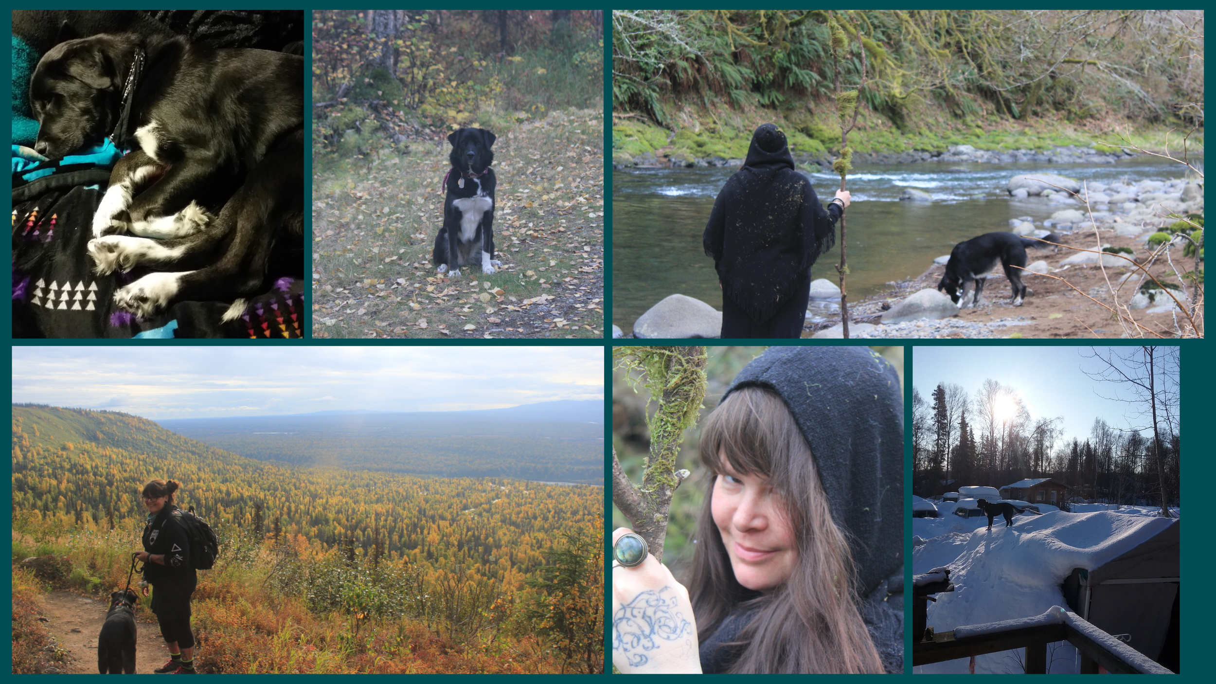 Top row: Pickle sleepin' on my bed, sittin' pretty on our favorite trail near our Alaska home, and us bonehunting on the Trask River at our Oregon home. Bottom row: Us on a day-hike on the K'esugi Ridge Trail in southeast Alaska, me on the Trask, and Pickle standing on top of the woodshed, having climbed up the snow berm at our house in Talkeetna, Alaska.