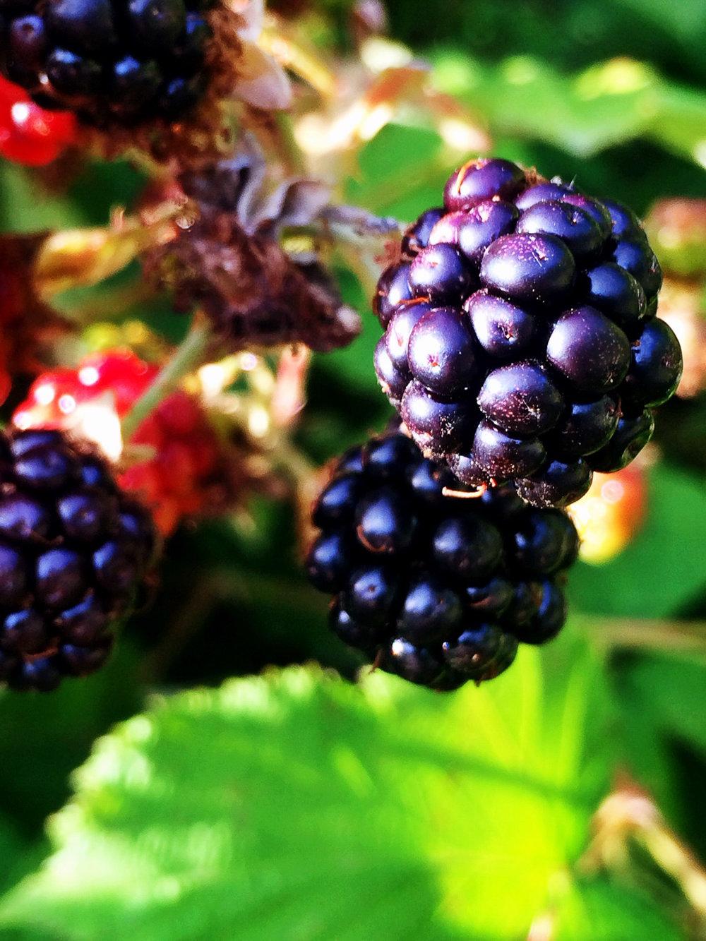 Pick fresh berries!