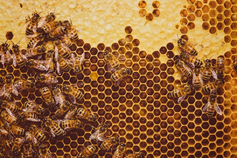 Watch our pollinators at work! OrcaSong farm is home to ____ bee farm.