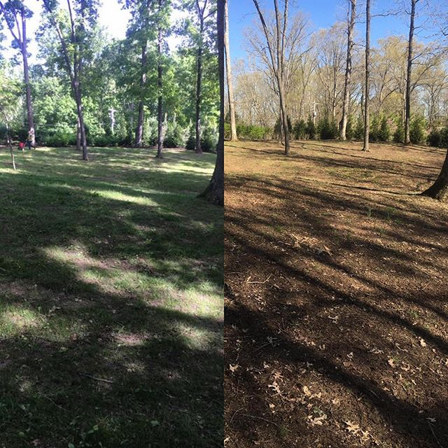 In 6 weeks we transformed this yard, and 10 others from this company. He called and said this was the best his lawns had looked in over 20 years. This is just the beginning! Can't wait to see it in the fall.