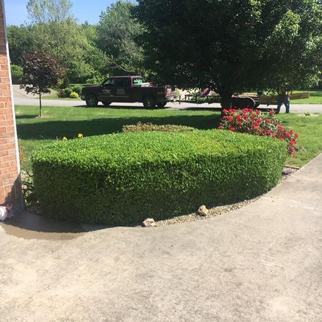 Not many things are more satisfying than some good before and after bush trimming.
