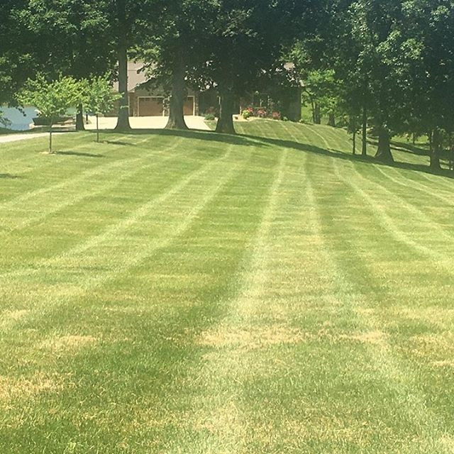 """Do you need your lawn mowed while on vacation? We gladly provided """"a stress free lawn"""" for this customer when he gets home. We can do it for you too."""