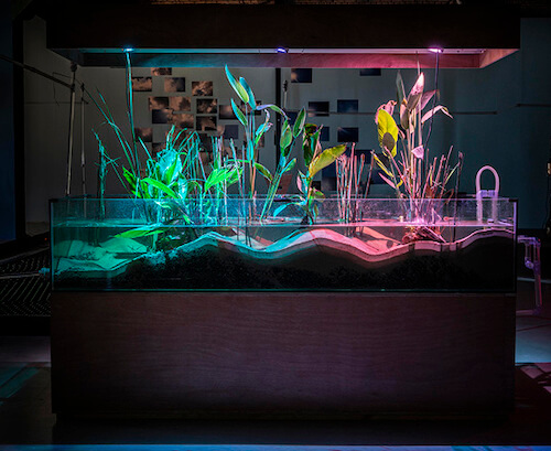 Tega Brain - Tega Brain is an Australian born artist and environmental engineer whose work explores Ai and its relationship with our natural world.