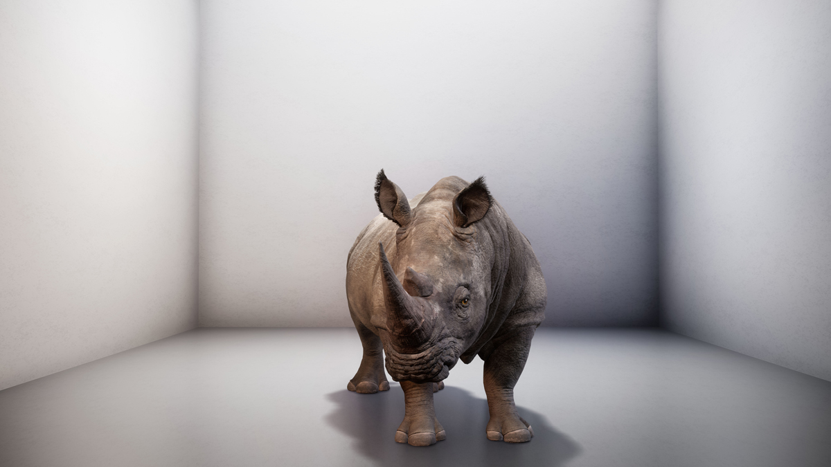 The Substitute - Using AI, a northern white rhino is digitally brought back to life, thus exploring a paradox: our preoccupation with creating new life forms, while neglecting existing ones.
