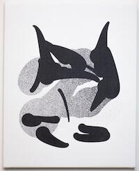 Killer Whale . Image courtesy of Tom White.
