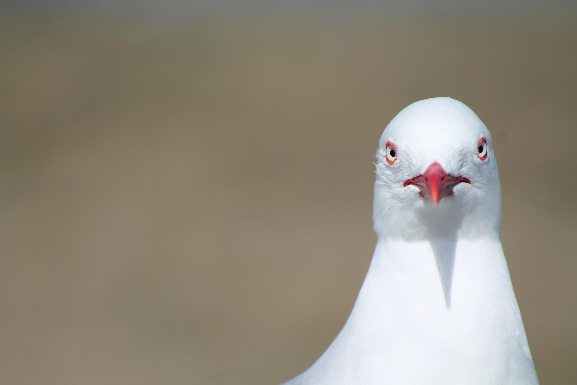 bird-525842_1920