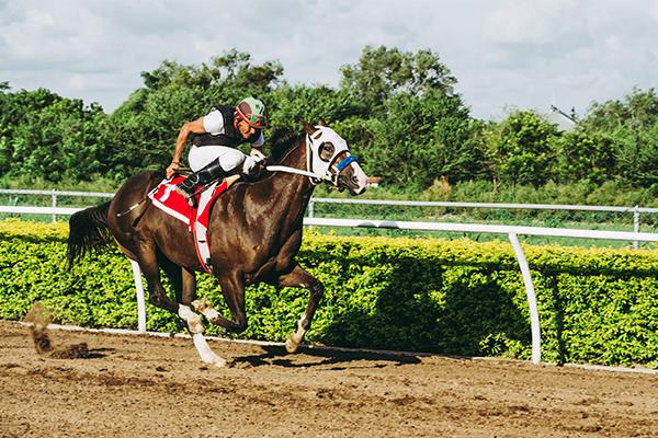 HorseRojasEquine_0004_animal-dirt-equestrian-1462363.jpg