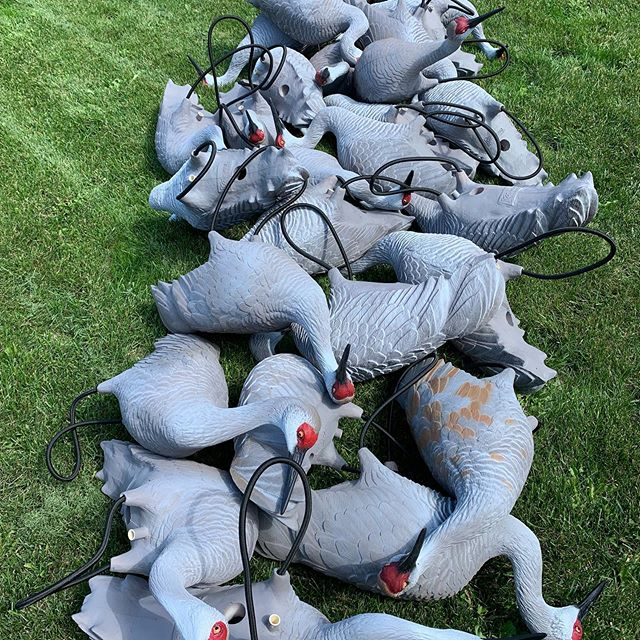 Won't be long until Sandhill crane season. New shipment of decoys from Deception decoys to add to the others Cant wait  #deceptiondecoys #Sandhill Crane hunting #faststrikeblinds #guidefitter