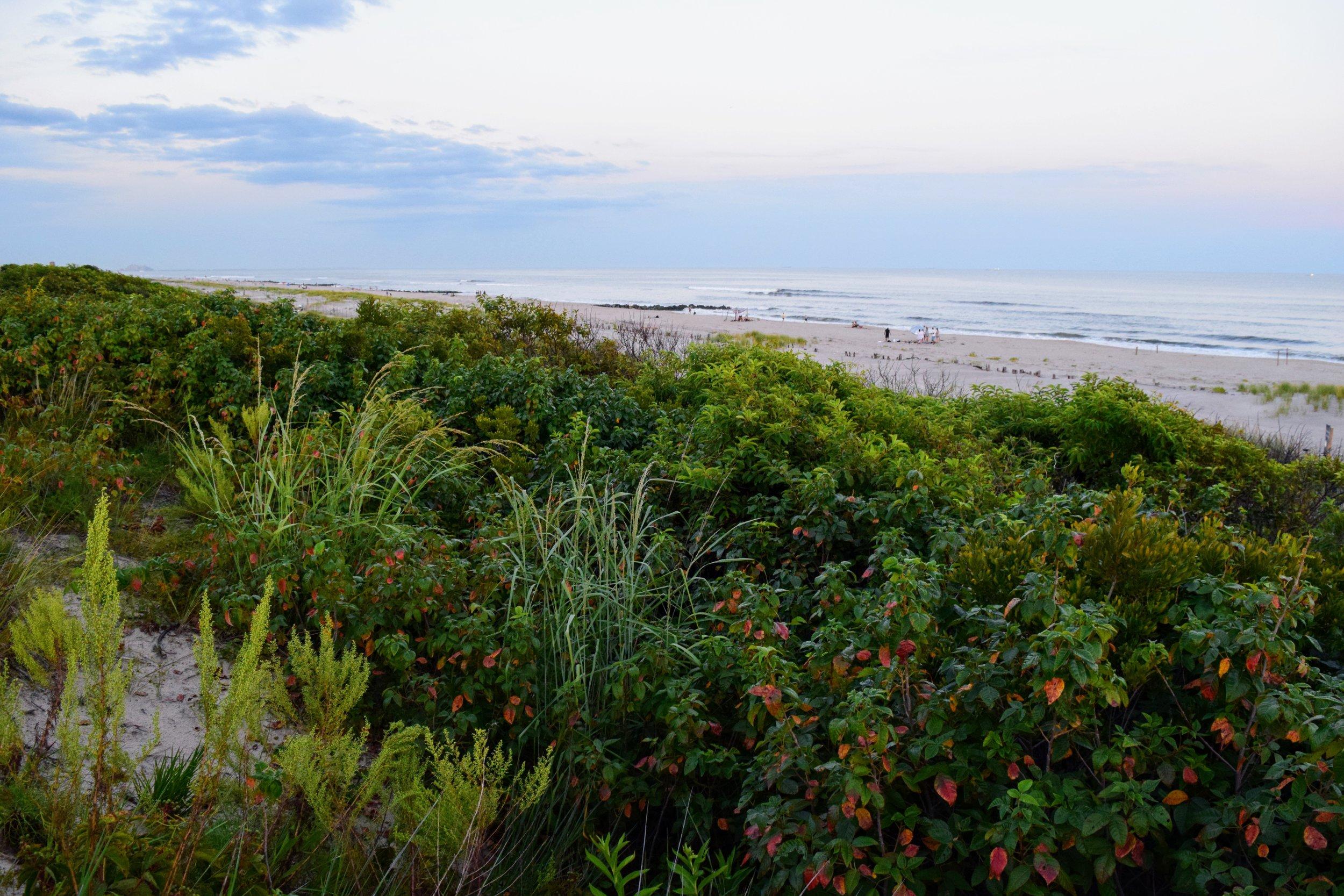 The Beach 1.jpg