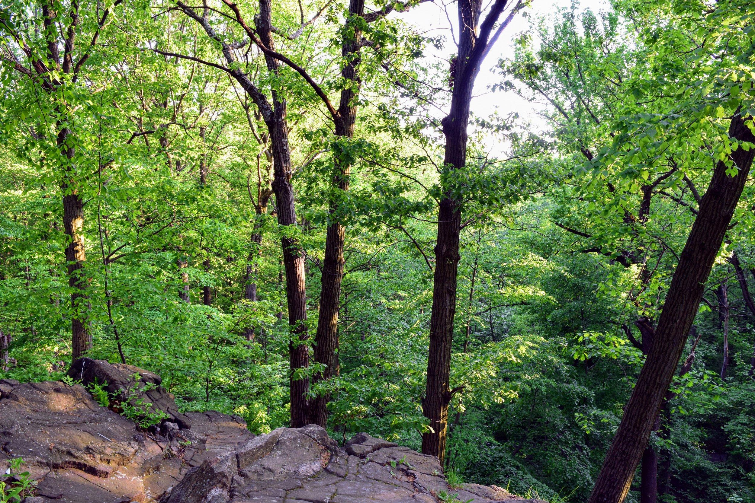 Northwest Forest 1.jpg