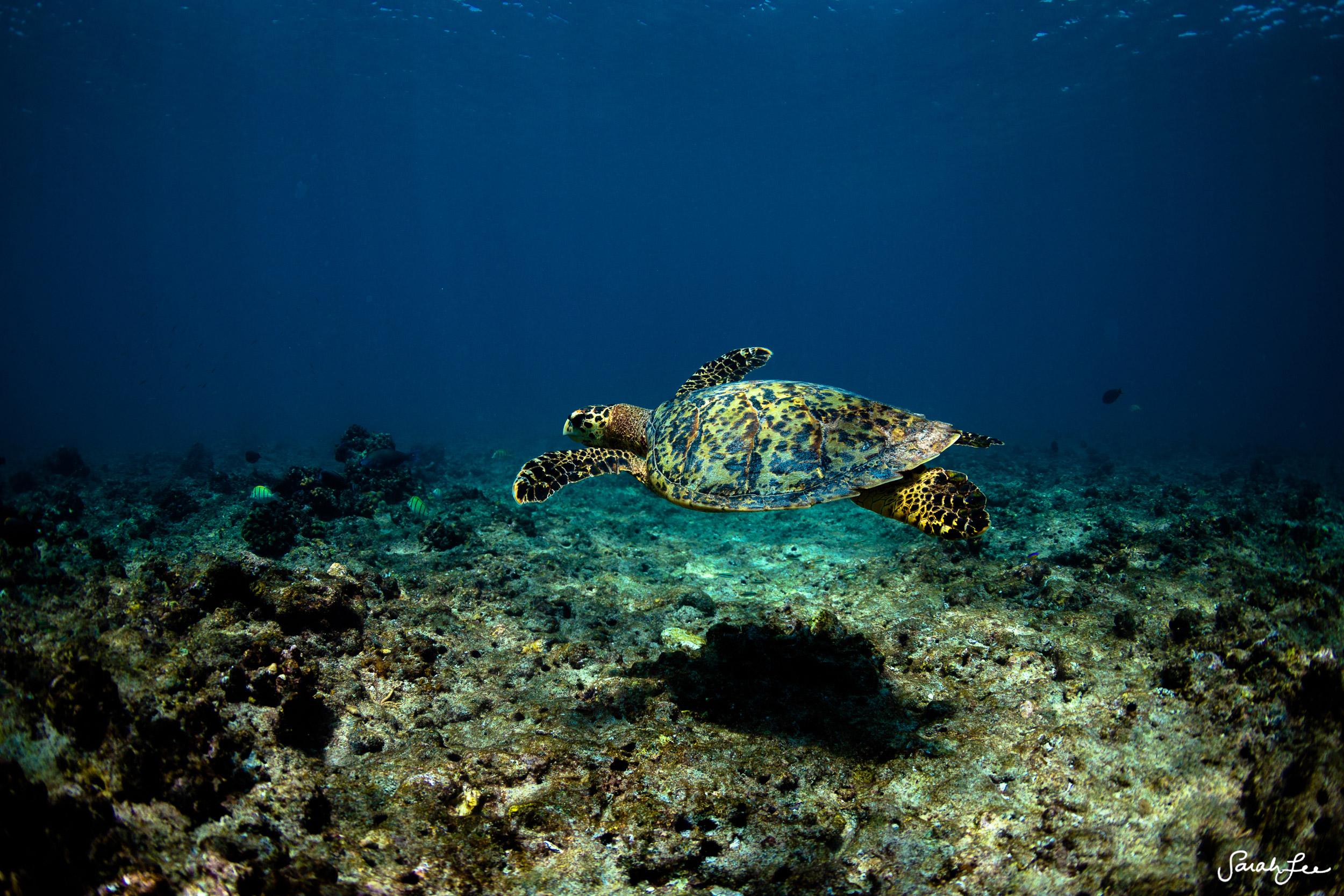 TheOceanSpell_Maldives_Surf_Trip_2844.jpg
