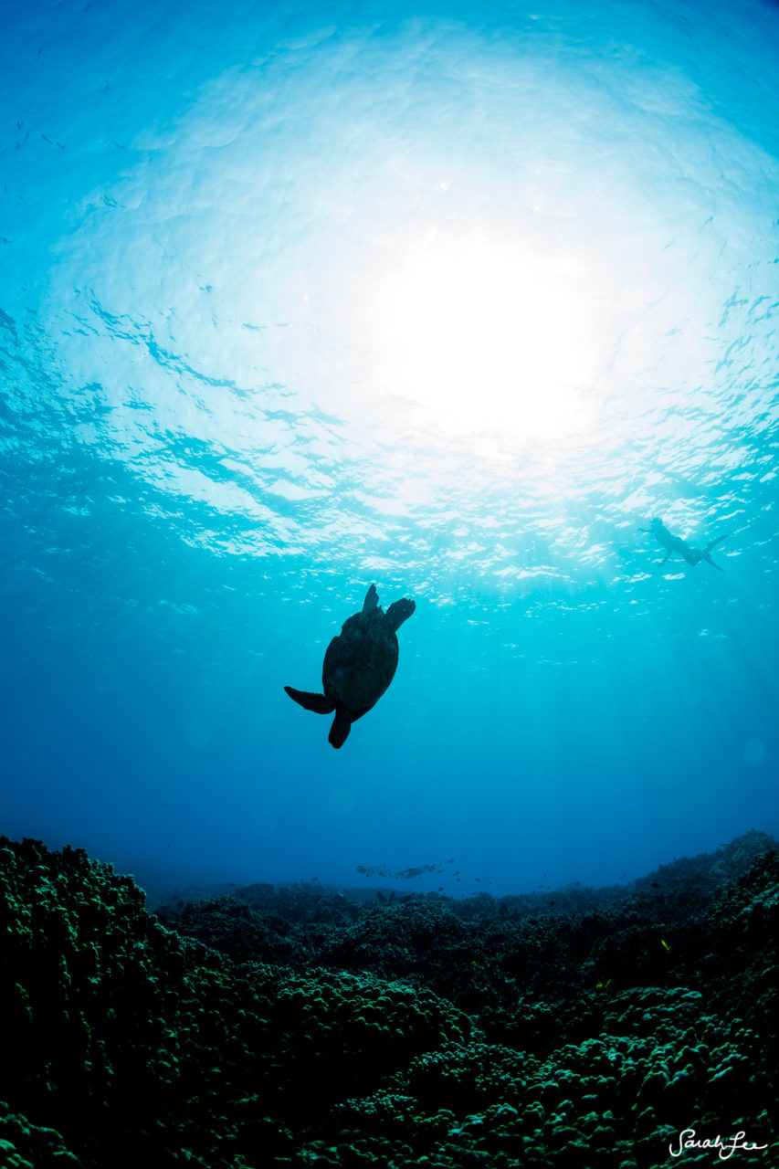 SarahLeePhoto_Underwater_Flash_Photography_Hawaii_3043-853x1280.jpg