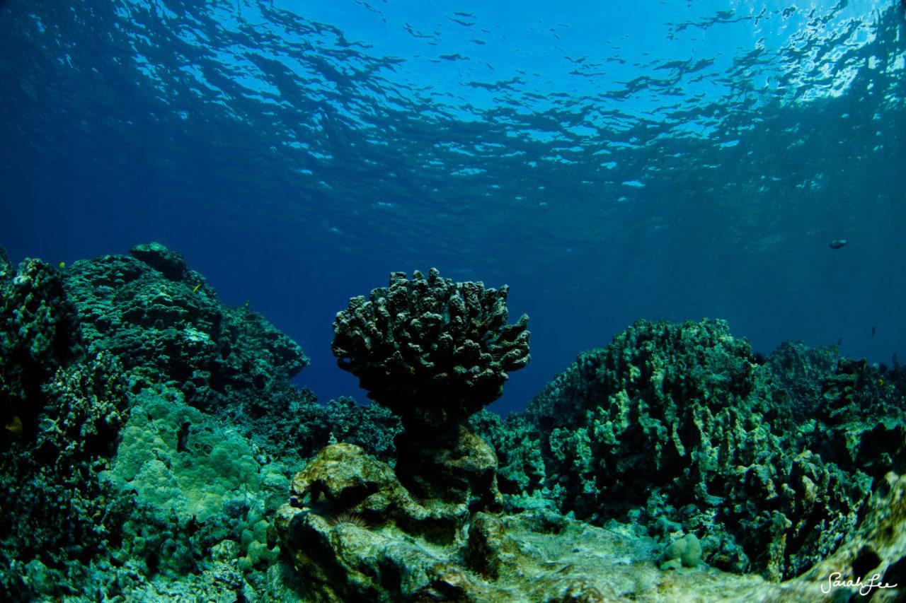 SarahLeePhoto_Underwater_Flash_Photography_Hawaii_3123-1280x853.jpg