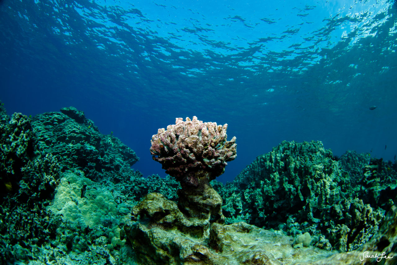 SarahLeePhoto_Underwater_Flash_Photography_Hawaii_3122-1280x853.jpg
