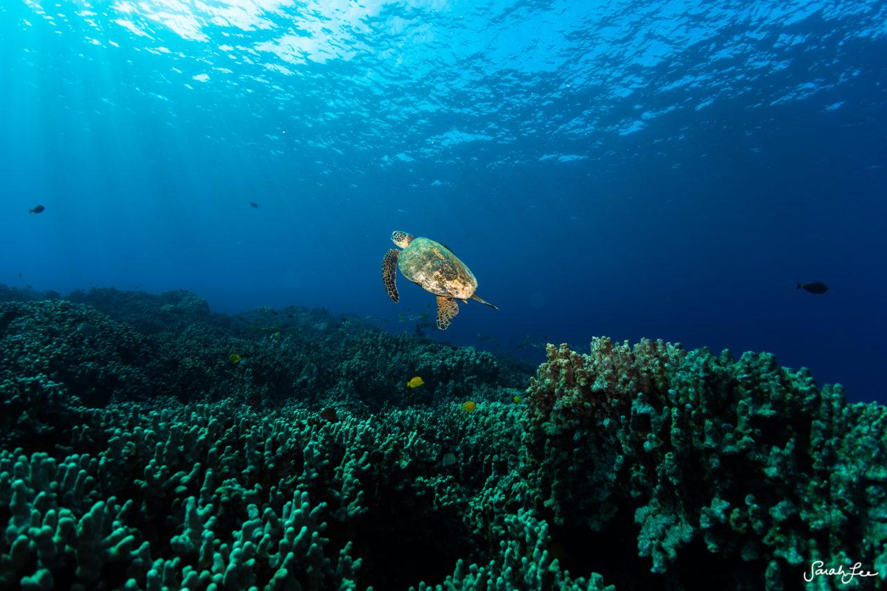 SarahLeePhoto_Underwater_Flash_Photography_Hawaii_3025-1280x853.jpg