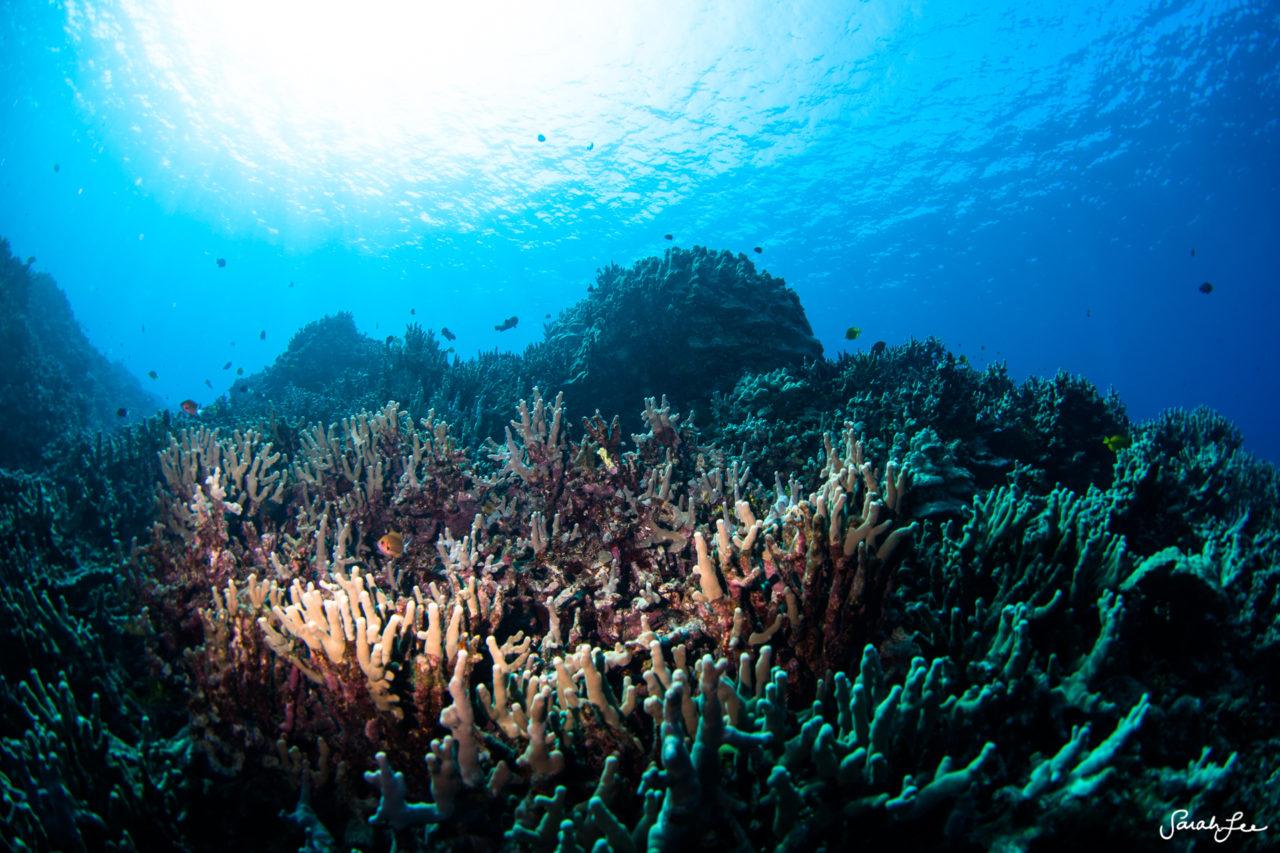 SarahLeePhoto_Underwater_Flash_Photography_Hawaii_3089-1280x853.jpg