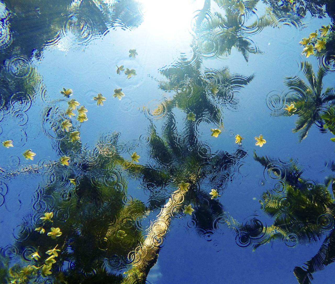 022_Sarah_Lee_Photography_Underwater_.jpg