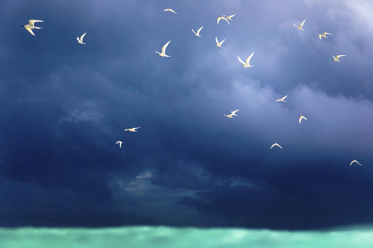 027_SarahLeePhoto_Landscape_Ocean_Photos_0302.jpg