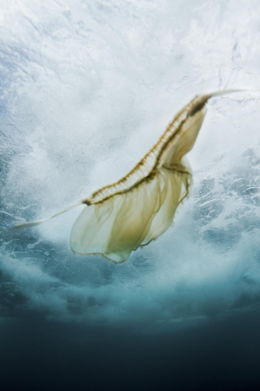 009_giada-forte-underwater-fashion-photos_4727.jpg