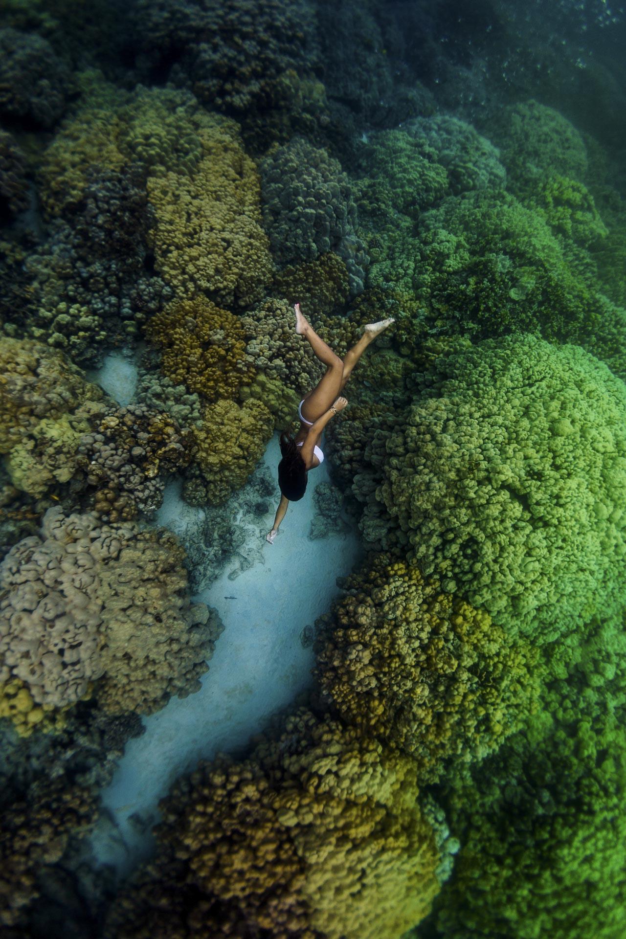 SarahLeePhoto_KimieMiner_PristineReef_Hawaii.jpg