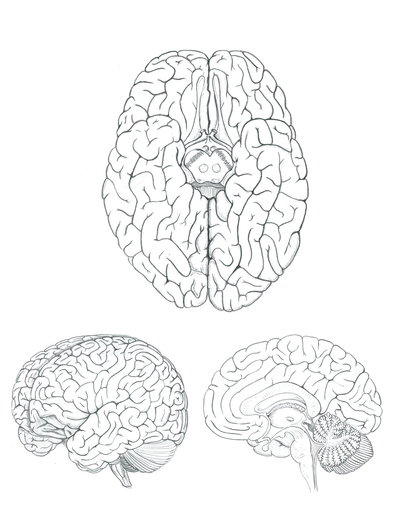 Brain-Sketch.jpg