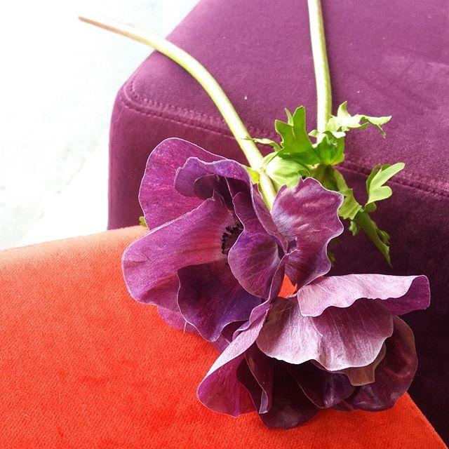 HOCK DICH! [POMP]  #hocker #stool #pouf #pomp #samt #velvet #wohnsalon #showroom #mainz #möbel #furniture #design