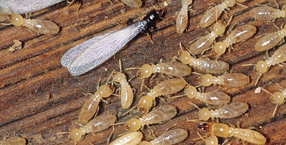 swarmer & workers.jpg