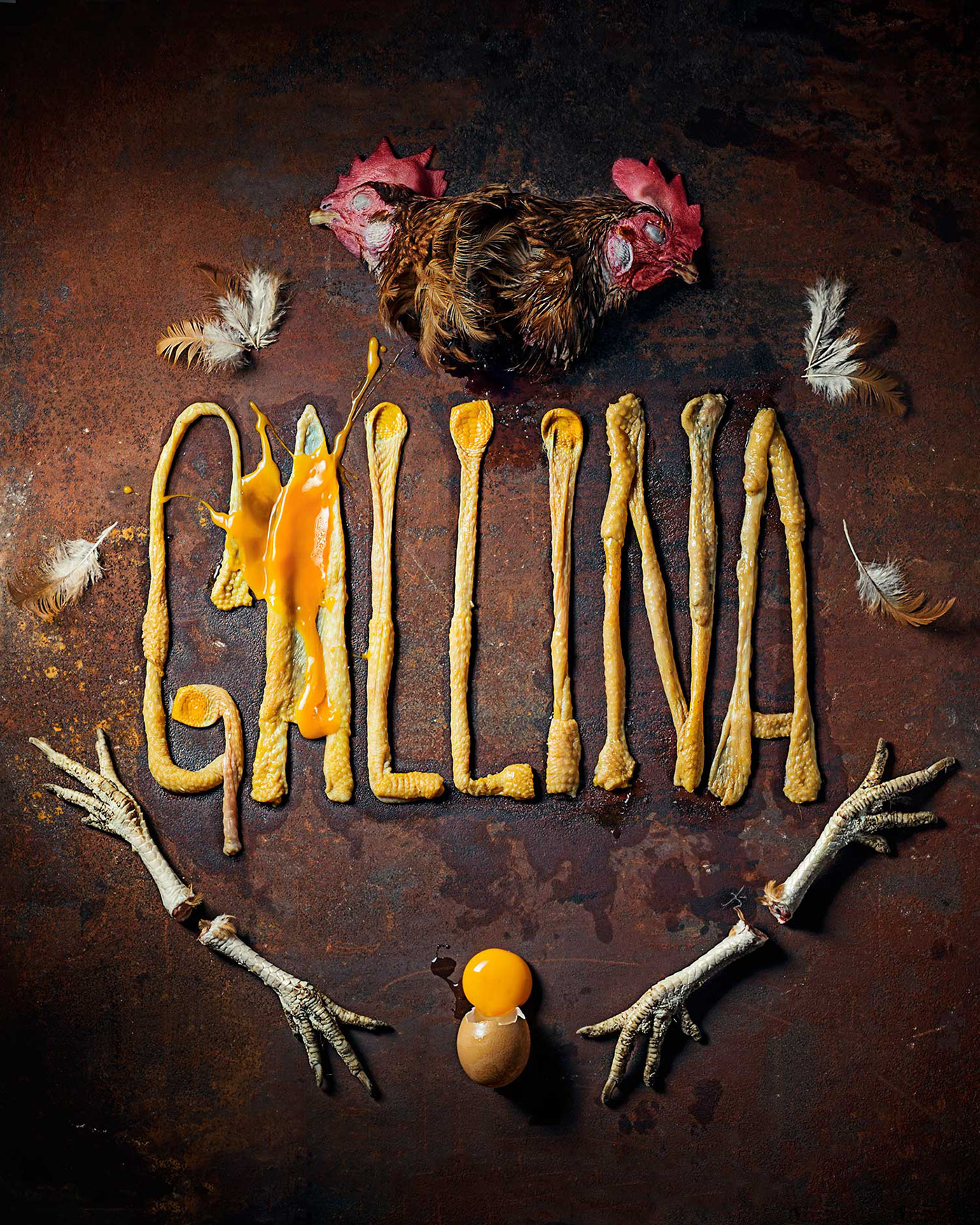 03 gallina