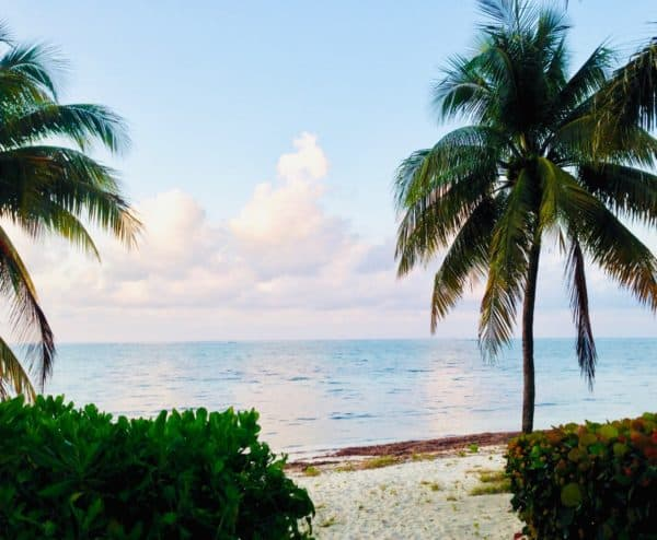 Grand-Cayman-Island-Beach-Palm-Tree-Ocean-Water-600x494.jpg