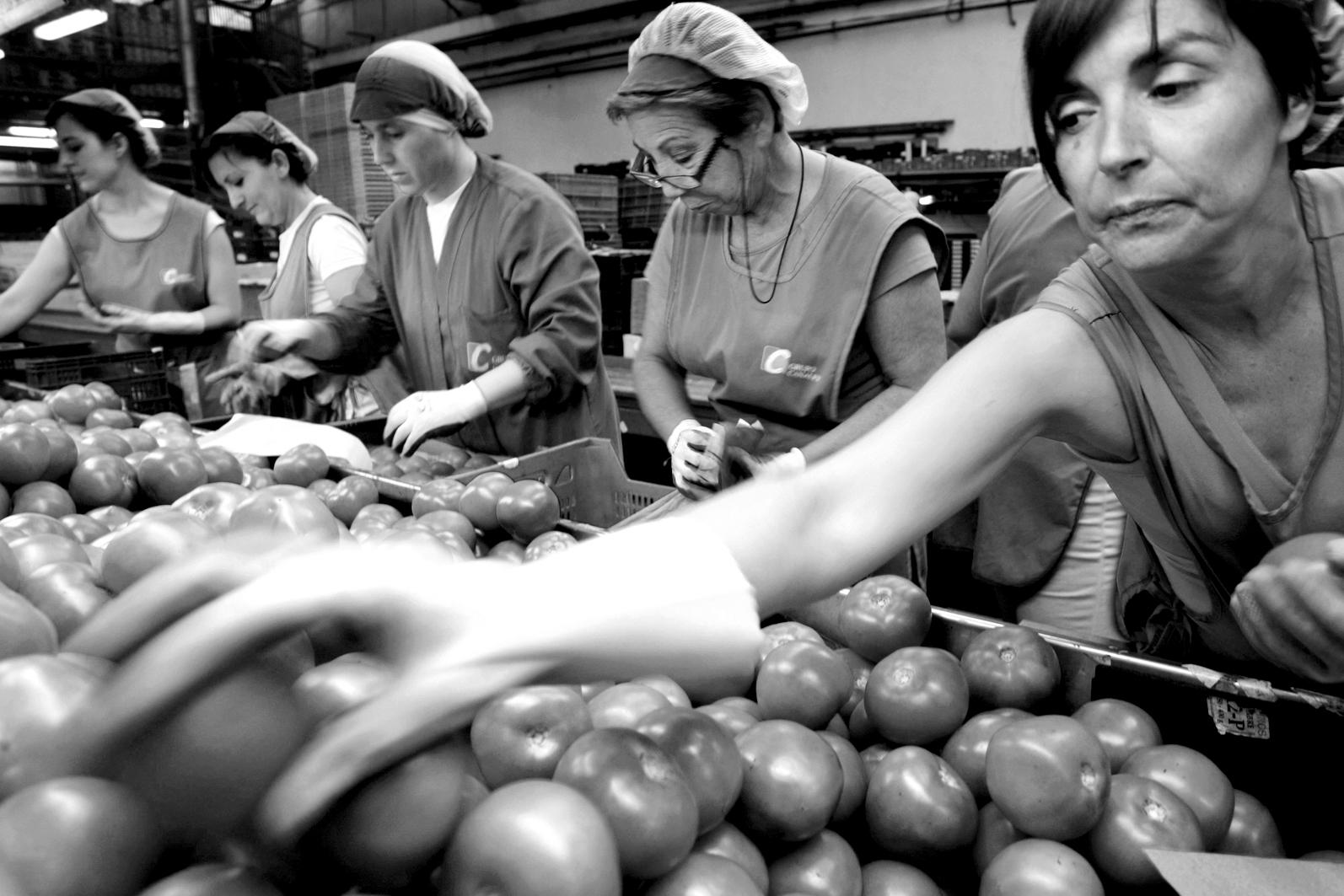 Emballage de fruits et légumes : un dur labeur à 6 euros l'heure. Photo : REUTERS/Francisco Bonilla
