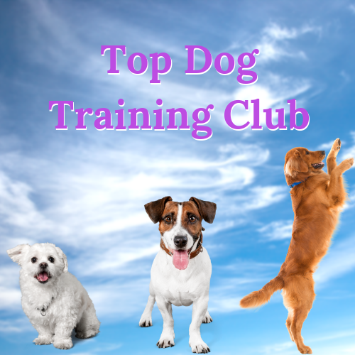 Dog Training - We offer classes in a fun and friendly atmosphere where we aim to teach you some basic and more advanced skills to strengthen your bond with your dog so you can work as a team and achieve great results together.