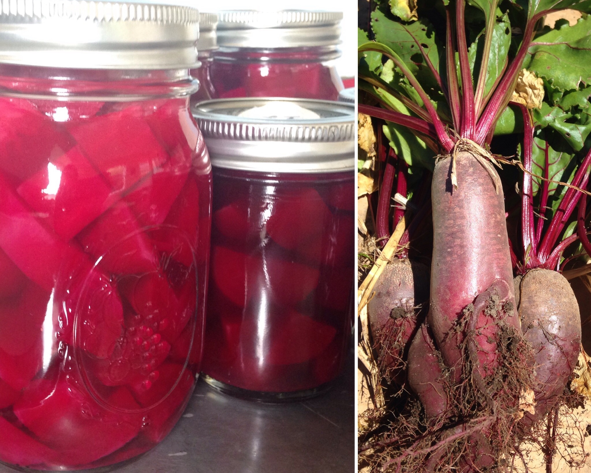 Pickled Beets - Good beet flavor with complex, sweet spices & a vinegar kick. An excellent addition to salads or cheese plates. $10/pint.