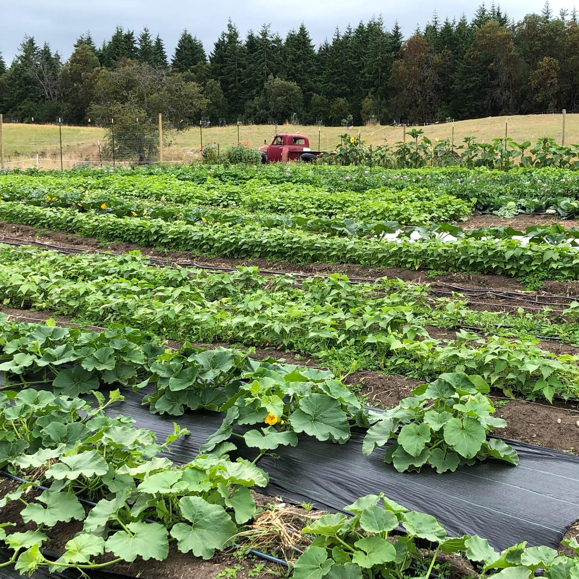 FARM PLOT 1