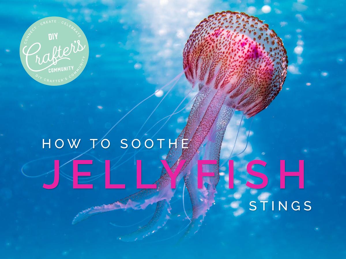 Jellyfish Stings - MN.png