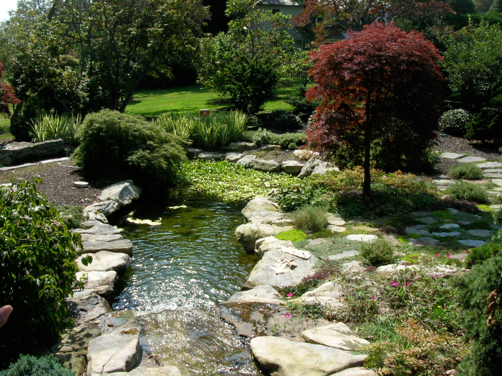 water_garden2.jpg
